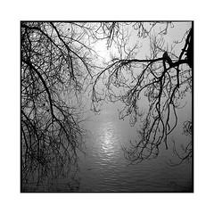 fairy • seine, normandy • 2016 (lem's) Tags: fairy reflection relfexion reflet seine river fleuve sun soleil arbres trees branches normandy normandie rolleiflex t
