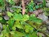 1Shot_20171112_073032 (vale 83) Tags: autumn leaves microsoft lumia 550 friends flickrcolour coloursplosion colourartaward beautifulexpression autofocus wearejuxt wpphoto