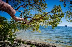 Manatee Coast - Riverview Pointe Preserve & Desoto National_ (Cracked_Lens) Tags: skyporn beach floridabeach floridatrail floridahiking florida floridapreserve floridanature nature hikingtrail hikingphotography hikingphotos hiking