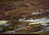 20160611_09 Reindeer (Rangifer tarandus) & their calves!   Near Beitostølen, Norway (ratexla) Tags: ratexla'snorwaytrip2016 norway 11jun2016 2016 canonpowershotsx50hs norge scandinavia scandinavian europe beautiful earth tellus photophotospicturepicturesimageimagesfotofotonbildbilder europaeuropean summer travel travelling traveling norden nordiccountries roadtrip wanderlust journey vacation holiday semester resaresor landscape nature scenery scenic ontheroad sommar norwegian mountain mountains beitostølen nonhumananimals life organism nonhumananimal animal animals djur cute cool adorable reindeer rangifertarandus ren renar tamren tamrenar fjällren running calf calves baby babies bäbis fjäll norskafjällen deer hjort hjortar