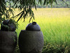 Jugs (MelindaChan ^..^) Tags: field farm agriculture plant houses tree zili diaolou villages 自力村 碉樓 世界文化遺產 worldscultureheritage kaiping china 開平 chinese green cluster chanmelmel mel melinda unesco melindachan