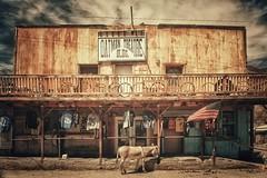 Sur la route 66 - Oatman (Isa-belle33) Tags: america amérique usa etatsunis arizona oatman route66 road roadtrip shop storefront boutique magasin mule âne donkey devanture frontage old ancien retro vintage