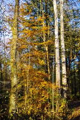 Legerader Wald (paulh.petersen) Tags: elements