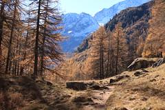 Arolla (bulbocode909) Tags: valais suisse arolla valdhérens mélèzes arbres paysages montagnes nature automne rochers bleu orange forêts