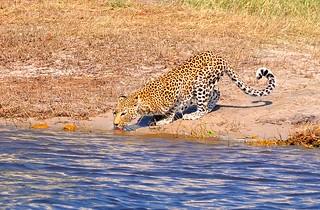 Botswana- Chobe NP