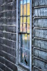 Petaluma Window Reflection (tom911r7) Tags: sonomacounty leica thomas brichta tom911r7 thomasbrichta petaluma marshall reflection window abandoned old building
