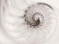 High Key Nautilus (Smiffy'37) Tags: 7dwf shell blackwhite closeup monochrome nautilus object fineart nature highkey soft minimalist