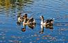 Reflejos (Txantxiku) Tags: naturaleza reflejos patos