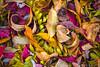 (James Neeley) Tags: leaves autumn closeup stilllife nature jamesneeley