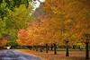 """At A Local Park (jimgspokane) Tags: autumn fall parks spokanewashingtonstate """"nikonflickraward"""""""