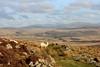We'll Keep a Welsh Sheep on the Hillside (RoystonVasey) Tags: canon eos m 1855mm stm zoom wales snowdonia snp rhinogydd rhinog fawr fach clip craig ddrwg moel ysgyfarnogod foel penolau diffwys