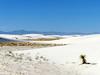 ALAMOGORDO, USA (NM) - White Sands N.M./ АЛАМОГОРДО, США (шт. Нью-Мексико) - нац. парк Белые Пески (El Ruso AG) Tags: unitedstates соединённыештаты ньюмексико американский сша usa us american nm newmexico estadosunidos штаты states аламогордо alamogordo национальныйпарк белыепески гипс гипсовый monumentonacional parquenacional nationalpark nationalmonument arenasblancas whitesands yeso gypsum