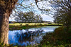 The Priory Pond (rustyruth1959) Tags: nikon nikond5600 tamron16300mm uk england eastanglia norfolk sheringham beestonregis beestonregispriorypond beestonregispriory stmaryinthemeadowpriorypond stmaryinthemeadowpriory priorypond pond water reflections trees barn landscape runton churchtower parishchurchoftheholytrinityrunton holytrinitychurchrunton church tower grass branches leaves outdoor fence undergrowth tree bark treetrunk green algae sky