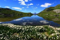 Val d'Aosta . Valle di Saint Barthlemy: verso il Col Chaleby, eriofori sul lago (mariagraziaschiapparelli) Tags: montagna mountain valdaosta valledisaintbarthlemy colchaleby allegrisinasceosidiventa escursionismo camminata colle estate