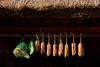 Dried Miso 味噌 (MelindaChan ^..^) Tags: yangdong folk village 良洞村 yangdongfolkvillage 村 gyeongju skorea 韓國 味噌 慶州 面豉 chanmelmel mel melinda melindachan house roof rooftop