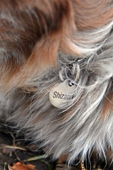 Shizandras Tag (Feeling Better...Still Slow To Comment!) Tags: ddc 2217 shizandrastag round silver name onthecollar fur greay white rust brown red