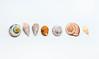 Group Of Sea Shells On white Background (wuestenigel) Tags: cutout souvenir cut background sea closeup beach macro echinoderm life style isolated shape white single seashell shell season red light scallop decoration aquatic one empty vintage stilllifephoto indoor ocean decor oceanic wildlife studio romantic gift nature spa object out nobody europe marine stilllife