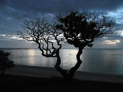 mauritius after sunset (kexi) Tags: mauritius ilemaurice africa shore water ocean indianocean tree silhouette sky blue dark clouds black samsung wb690 october 2016 evening instantfave