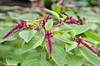 DSC_3160 (facebook.com/DorotaOstrowskaFoto) Tags: ogródbotaniczny kwiaty