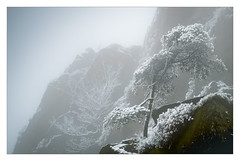 The Big Chill (Dave Fieldhouse Photography) Tags: tree theroaches peakdistrict fog mist misty foggy nationalpark mono splittone lonetree rocks fuji fujixt2 fujifilm wwwdavefieldhousephotographycom landscape outdoors countryside freezing cold winter snow staffordshire staffs