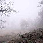 Misty morning thumbnail