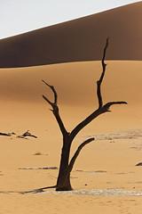 Lonely Tree III (T_Schildbach) Tags: tree sossusvlei desert sand dunes canon sigma namib namibia