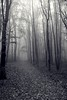 _MG_2516_C_Psc (grzegorz_63) Tags: autumn park pathway mist fog trees leaves perspective monochrom outside canon70d
