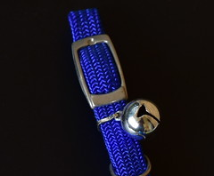 Cat collar {Bugsy} (Images by Jeff - from the sea) Tags: smileonsaturday shinymetals cat kitten collar bell blue nikon tamronsp2470mmf28divcusd d7200 black silver chrome macro reflections
