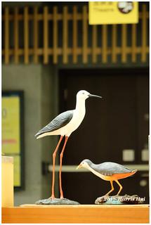 Bird Photography - Hong Kong XT4827e