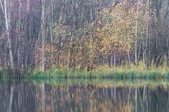IMG_3415.jpg (iantaylor19) Tags: brandon marsh warwickshire wildlife trust