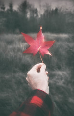The last leaf of autumn (MontanaRoots (aka Craig)) Tags: woolshirt buffalocheck plaid red woolrich leaf autumn fall faded nostalgic