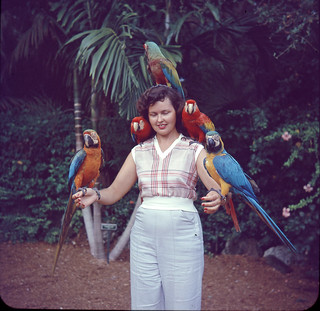 Glass Slide of Woman Posing with Parrots, 1950s