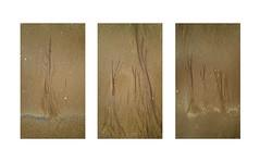 Sand Trees Triptych (Ger208k) Tags: ireland dublin dollymount northbullisland sand abstract tidal shells texture triptych samsunggalaxy6 android gerardmcgrath