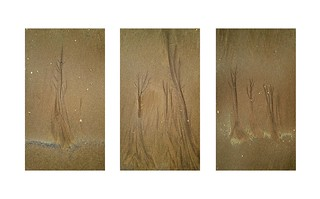 Sand Trees Triptych