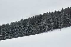 Wolfskuhl (Joerg Marx) Tags: wald bäume licht schnee landschaft winter forest wood woodland trees rural light landscape snow