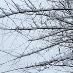 Winter Lace - Dentelle de neige thumbnail