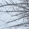 Winter Lace - Dentelle de neige (monteregina) Tags: nb201412103683 québec canada hiver winter neige snow branches monteregina designs textures branchs twigs nature natur blanc white arbre tree abstrait abstract abstractnature abstraction patterns touffesdeneige clumpsofsnow