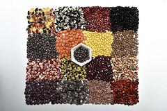 NP Bean Diversity at the CIAT genebank2