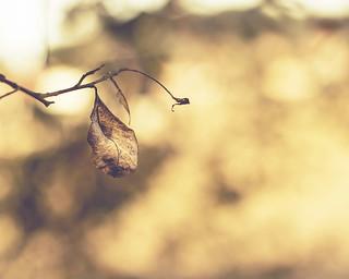 diario de otoño...