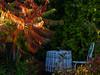 Garden idyll 3 (flickrolf) Tags: essigbaum sumach sumac staghornsumac chair table lightcolourfoliage