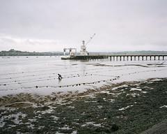 Saltash Passage #5 (@davidflem) Tags: saltash plymouth cornwall devon tamar mamiya mamiya7 50mm kodak portra portra400 120film 6x7 mediumformat istillshootfilm