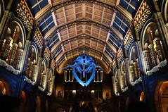 DSC08971 (lin_lap) Tags: london uk england city europe architecture urban naturalhistorymusuem whale bone masterpiece museum