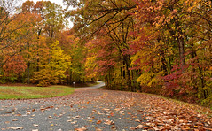 Autumn (CU TEO MD) Tags: trees leaves autumn path road naturebynikon nikon d750 24120mm ngc twop soe artofimages simplysuperb outdoor maryland park explore inexplore