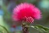 Universe (Hanna Tor) Tags: color vibrant hannator garden summer autumn nature beauty light green grass tree red