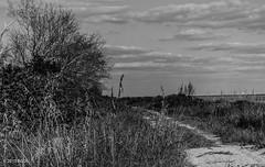 Somewhere Along Here!! (BGDL) Tags: lightroomcc afsnikkor55200mm1456g bgdl landscape seascape nikond7000 florida annamarieisland monochrome blackandwhite 7daysofshooting week18 nature blackandwhitewednesday