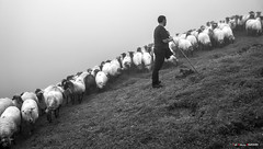 En la loma (Jabi Artaraz) Tags: jabiartaraz jartaraz zb euskoflickr aldaminape aldaminoste gorbea rebaño artaldea jon jonetxebarria pastor pastorea artzaina nature natura