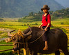 The Girl in Red (Lao Cai, Vietnam 2009) (Alex Stoen) Tags: agriculture alexstoen canon canon5dmarkii collection colores colors ef24105f4lisusm fields flickr geotagged girl indochina indochine laocaitomuonghum portrait travel vietnam waterbuffalo animal childhood everydaylife life morning red rojo rouge smugmug webh