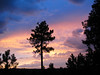 Daylight Departure (zoniedude1) Tags: arizona sunset mogollonrim therim stormyweather monsoon thunderstorms daylightdeparture sky evening summer aftertherain stormclouds skyscape sundown view coloradoplateau forest rim edge silhouettes coconinonf coconinonationalforest outdoors adventure exploration discovery beauty 7600ftelevation highcountry rimexpedition2014 nature southwest canonpowershotg12 pspx9 zoniedude1 earthnaturelife explore