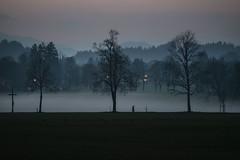 Baviera, Novembre 2017 (masowar (often off, sorry!!)) Tags: germania germany bavaria bayern paesaggio panorama alpi alps trees autumn autunno massimilianoa masowar massimilianoacquisti masowarzone ©massimilianoacquisti nikkor nikon nikond800 fog nebbia myst