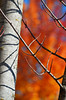 Glory Days... (James_D_Images) Tags: autumn fall bokeh colourful orange red blue tree trunk stem bare branches vancouver britishcolumbia